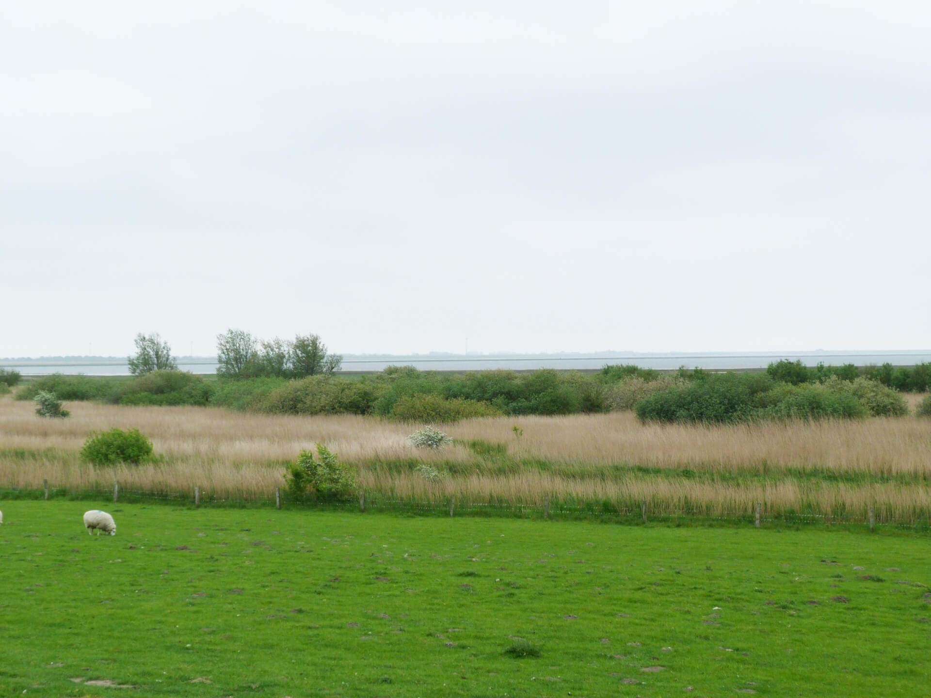 Holmer see, Naturschutzgebiet Beltringharder Koog