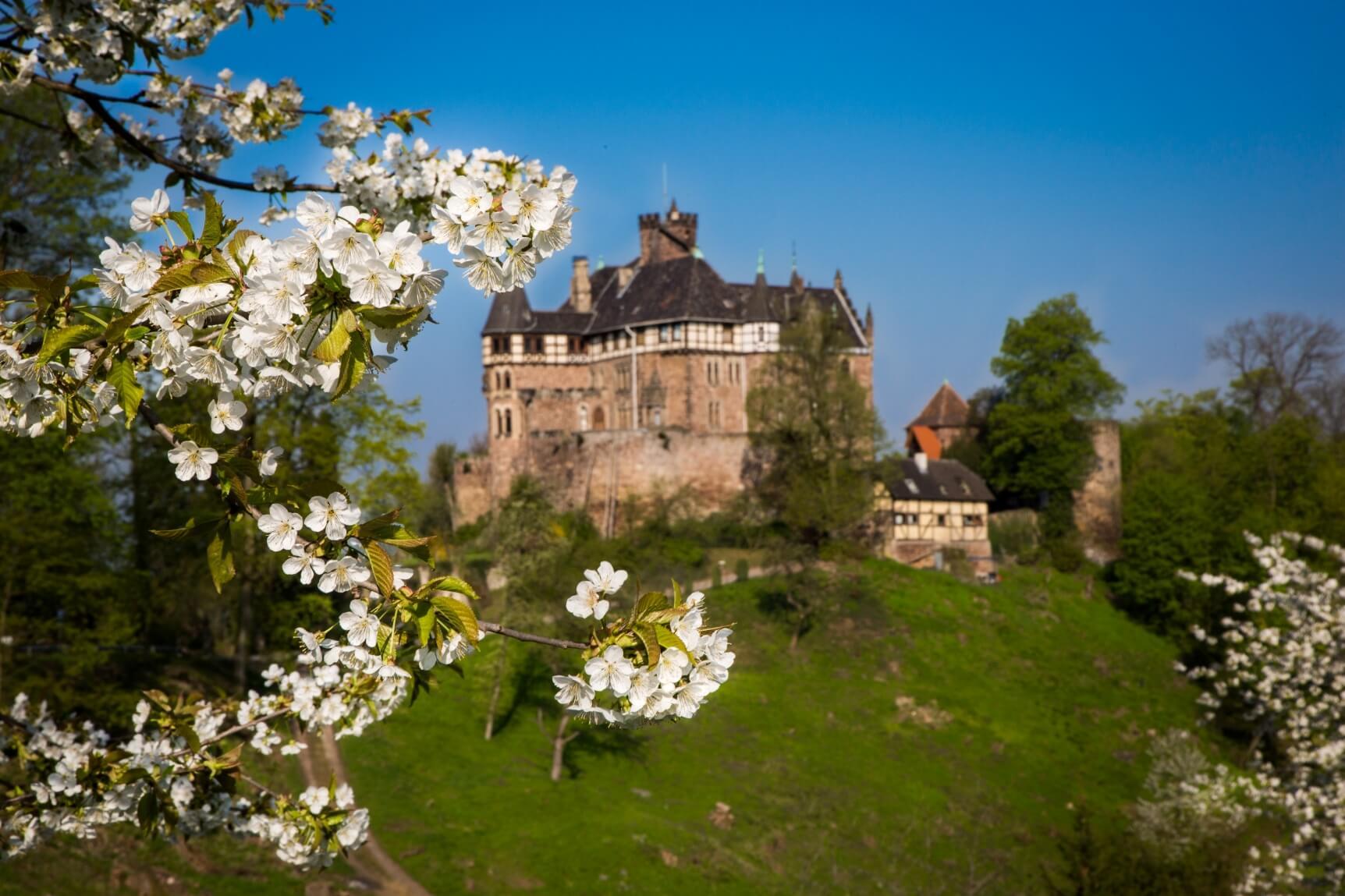 Kirschblüte am Schloss Berlepsch